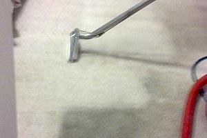 Clean carpets can improve allergy symptoms