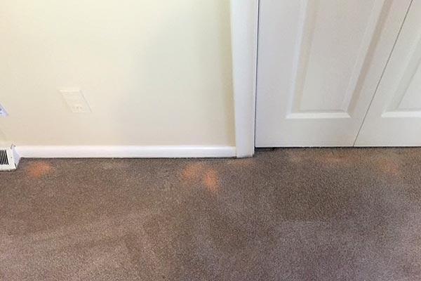 carpet_bleach_spots